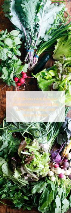 CSA Weeks 1 & 2: Essential Recipes for Greens + Radish (or Turnip) Tartines with Anchovy Butter